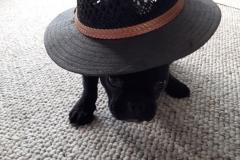 7-Tigo_Blitz-met-een-hoed
